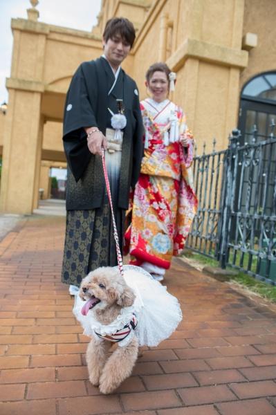新潟県三条市 長岡市 新潟市 結婚式場 前撮影 打掛 犬 ペット